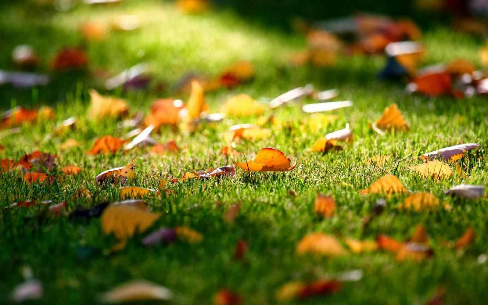 Falling-Leaves-Wallpaper-525436.jpg