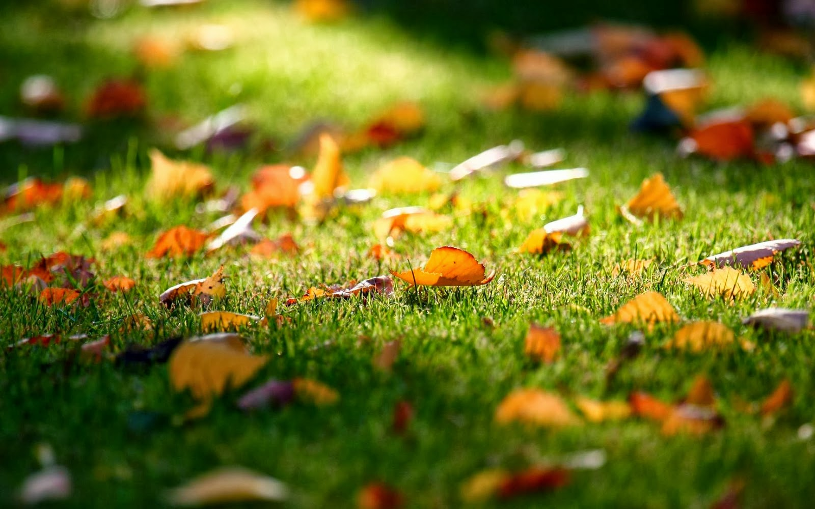 Falling-Leaves-Wallpaper-525436.jpg