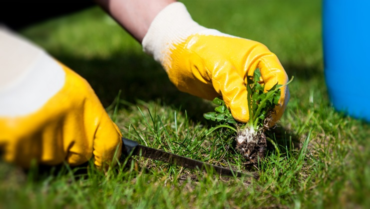 Lawn-weed-control-and-prevention.jpg