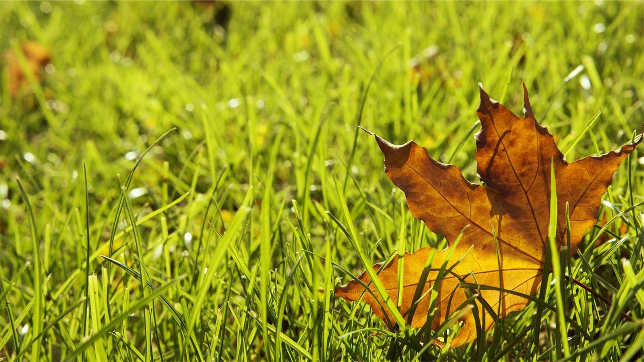 grass-698649_1280.jpg