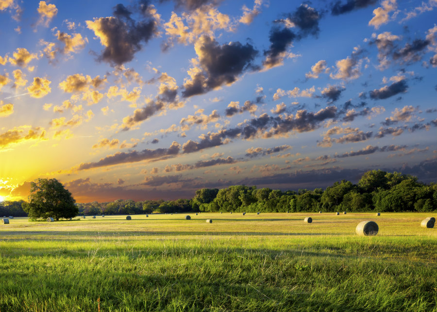 Texas_hay_bales_on_pasture_land_900