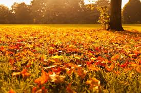 Fall Lawn Care: 5EasySteps toTakeRightNow